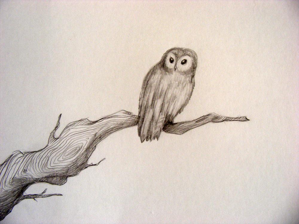 Tawny Owl Detail